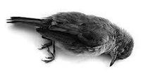 parool_dood-vogeltje