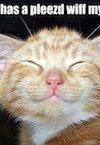 Smug kitten